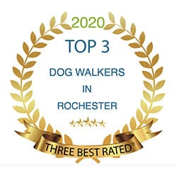 Top 3 Dog Walkers Rochester